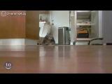 Испуганные кошки